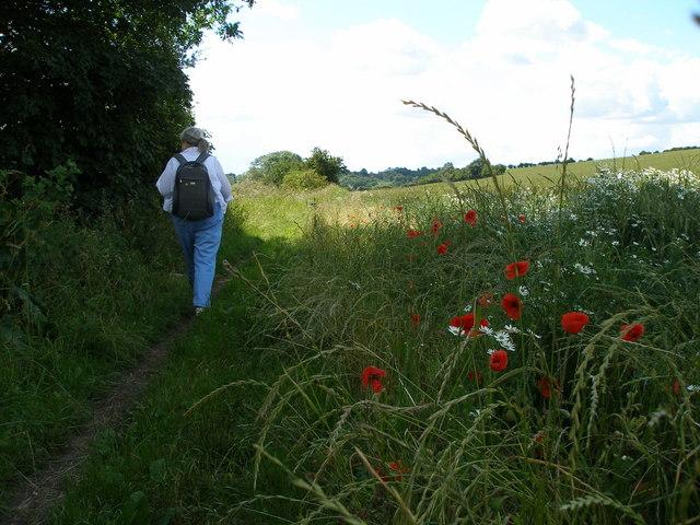 Walking along the Teesdale Way footpath