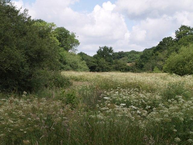Meadow by Hole Stock Bridge