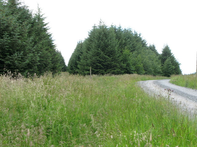Forest track and footpath near Craigshield