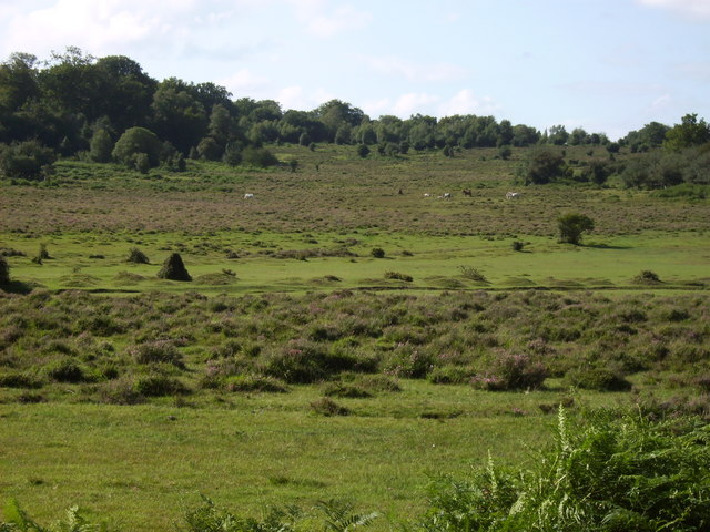 Eyeworth Wood