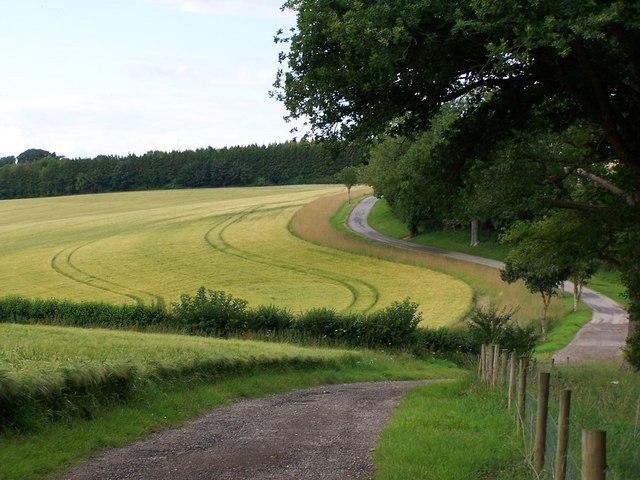 Winding lane at Lower Eldon Farm