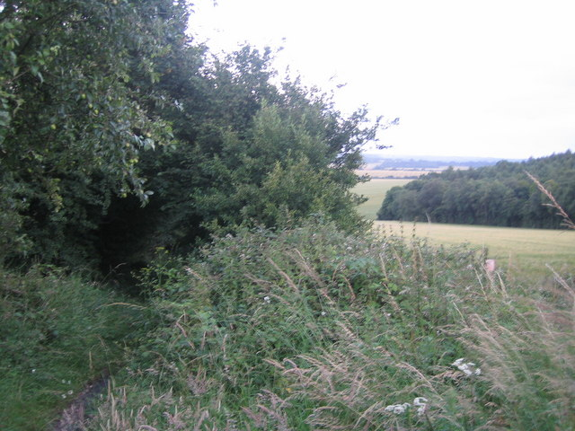 Bridleway near Manor Farm, Chilmark