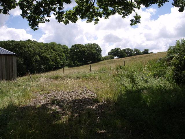 Field near Upcott Farm