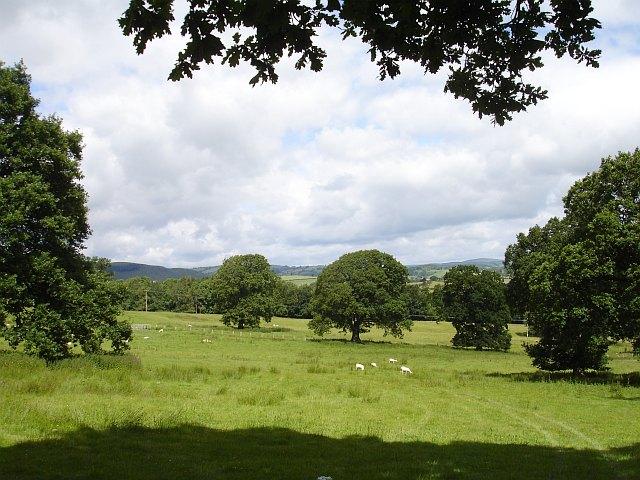 Pasture near Stingwern
