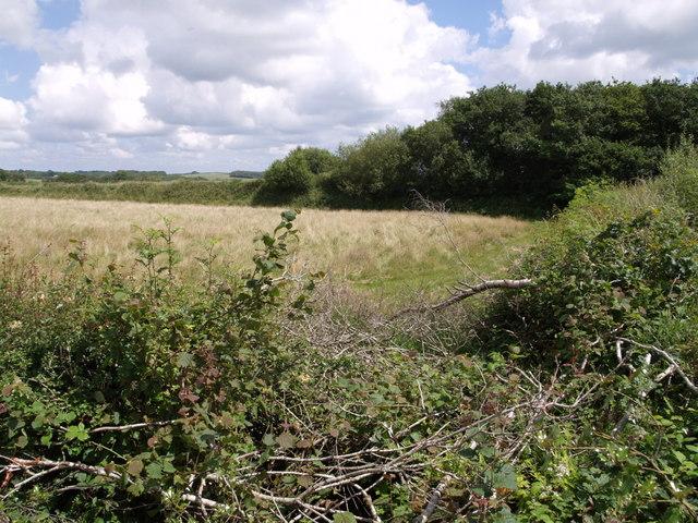 Disused railway near Leigh Farm