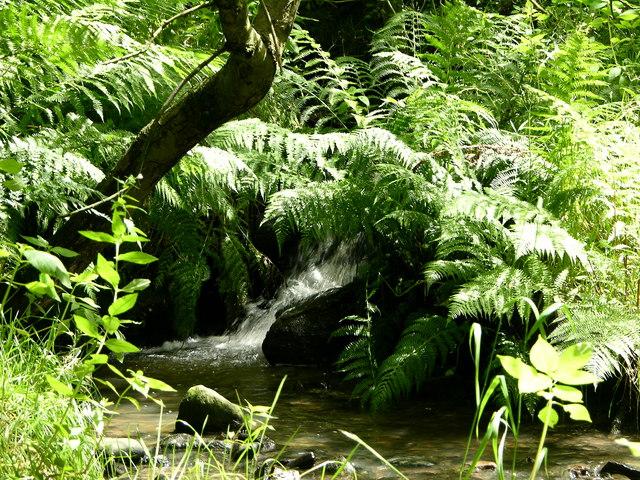Stream leading to River Irwell