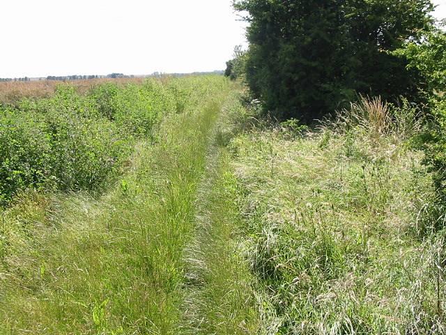 The Wantsum Walk