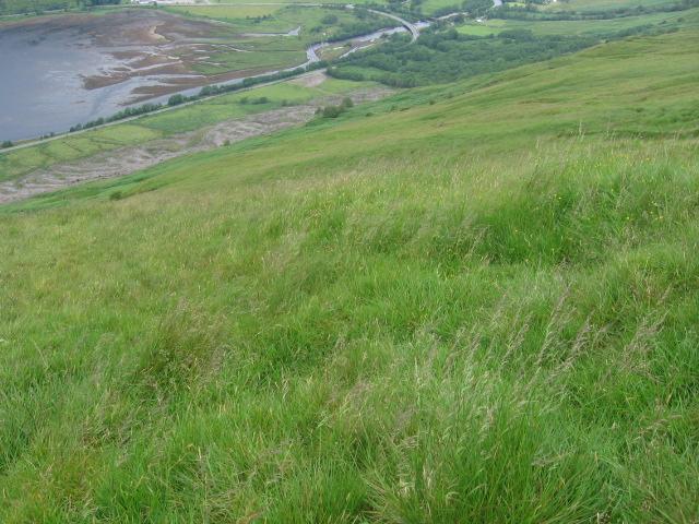 Hillside below An t-Sron