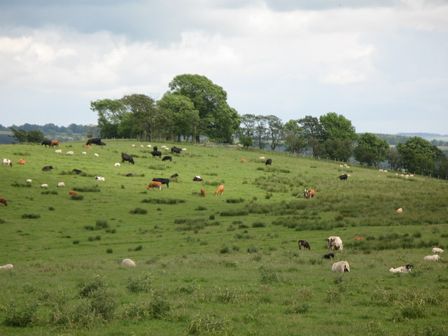 Rough pastures on Wark Common