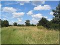 TL2879 : Grassy track by stream by Tim Heaton