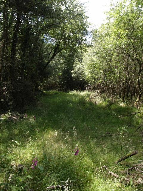 Woodland near Whiteleigh Water