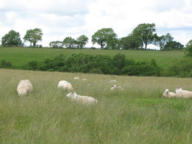 Pastures near Dean Burn