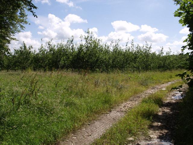 Orchard, Bradford