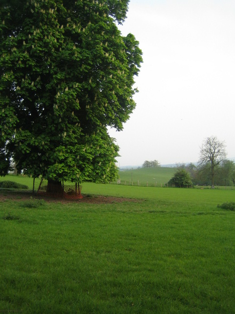 Tree near Spring Hill, Grendon Underwood