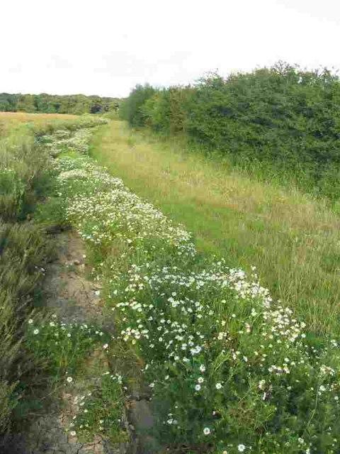 Track alongside Aswarby Thorne