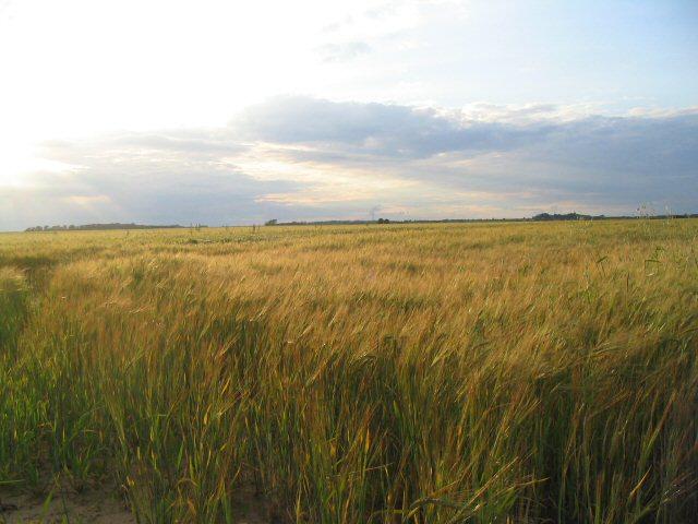 Farmland near Brauncewell, Lincs