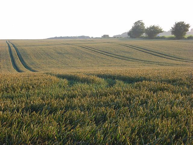 Farmland, Winterbourne Stoke