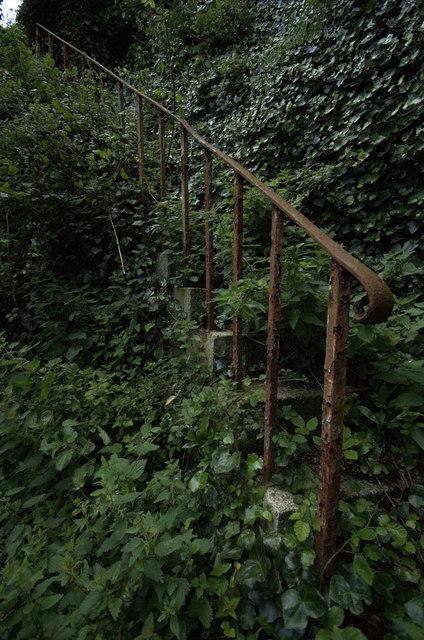Overgrown Stairway