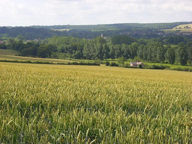 Farmland, Wilton