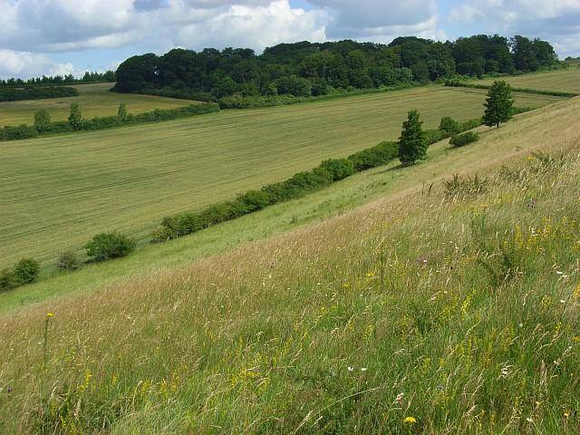 Downland, Chilhampton