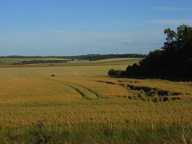 Farmland near Winterbourne Stoke