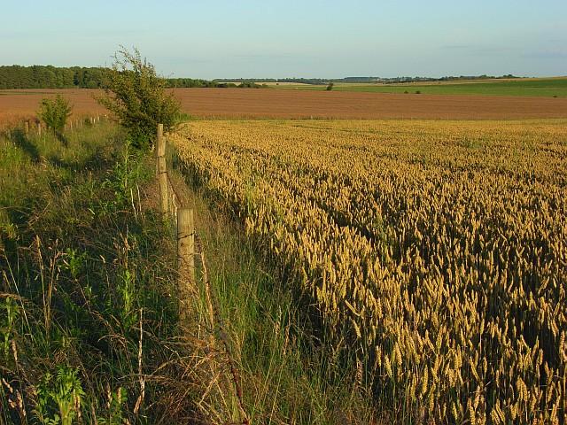 Farmland near Rollestone