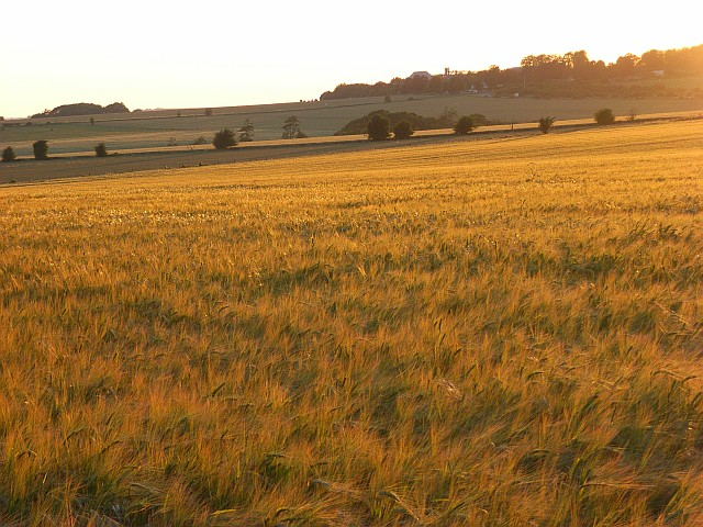 Farmland, Larkhill