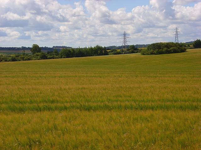 Barley near Amesbury