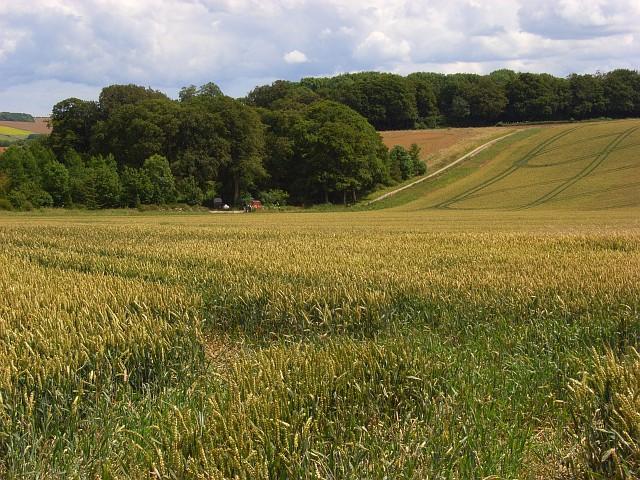 Farmland, Berwick St James