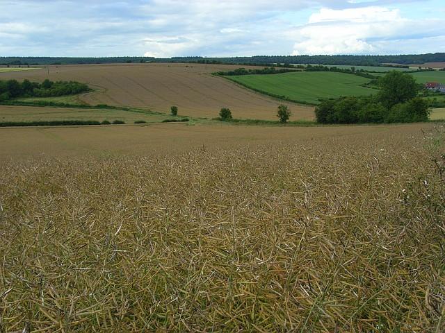 Farmland, Dinton