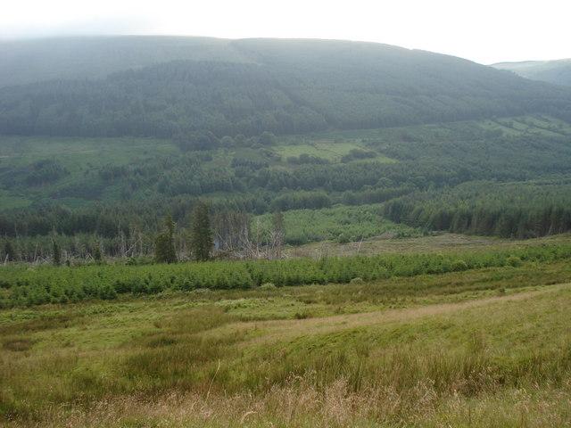 Taf Fechan forest