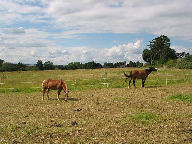 Animals grazing near Charlbury