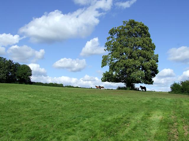 Grazing, Aston Eyre, Shropshire