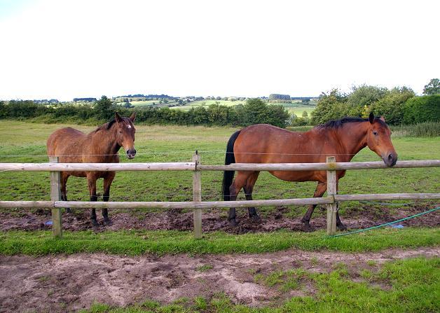 Horses in Hampton Green