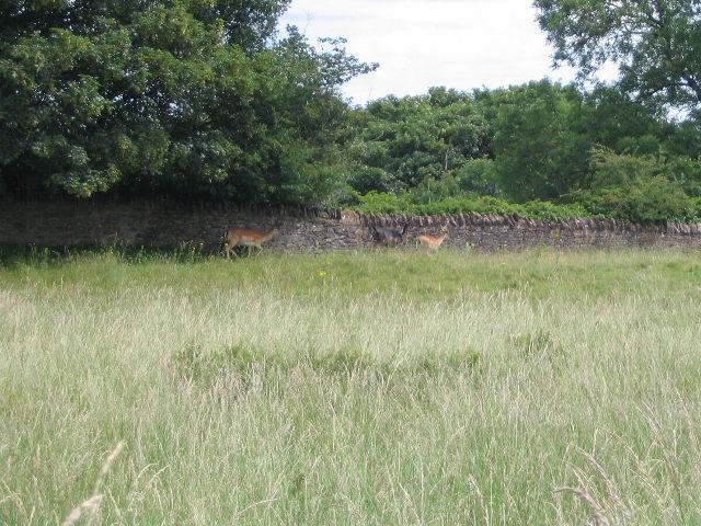 Deer in Loton Park