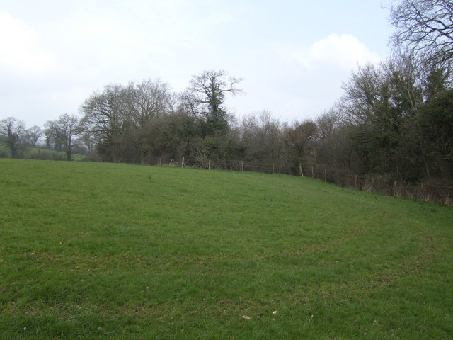 Field by Horwood Lane
