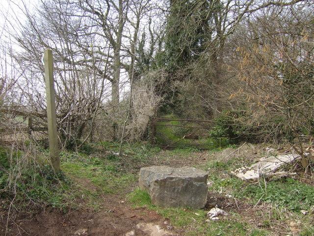 Corner of Priest Wood