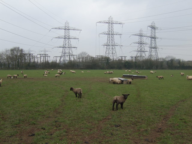Sheep and substation