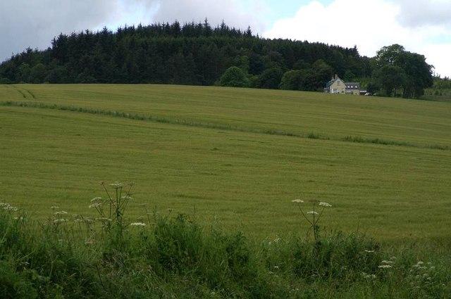 Crops at Clunie