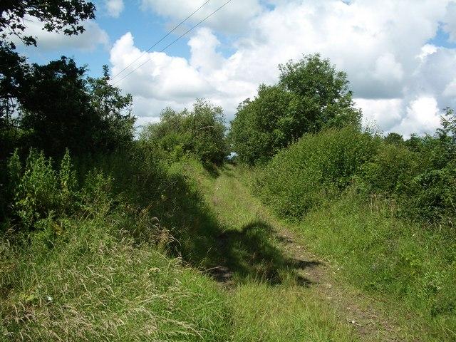 Overgrown drove near Totnell Corner
