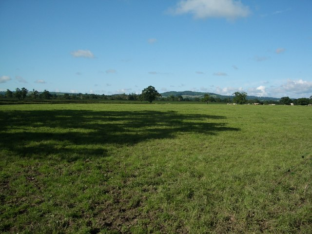 Pasture near Leigh