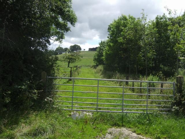 Beside Leigh Wood