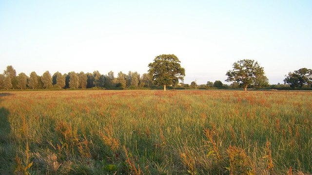 Evening walk along the Parrett Trail