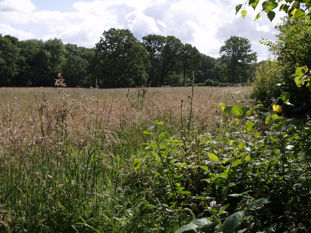 Meadow beside Birches Copse