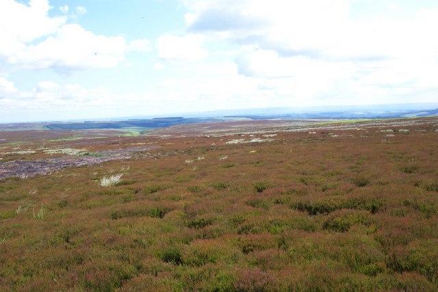 Sourmire Moor