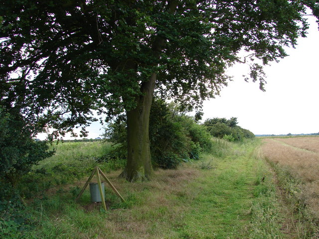 Cuckoo Lane Tree and Bird Feeder