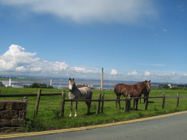 Ponies on Weston Road, Runcorn Hill