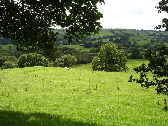 Pasture near Ty'n-y-fron