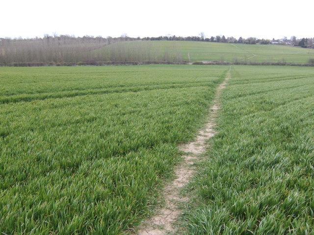 Footpath across the wheat