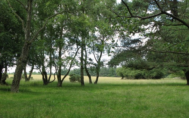 Field in the middle of Dipton Wood